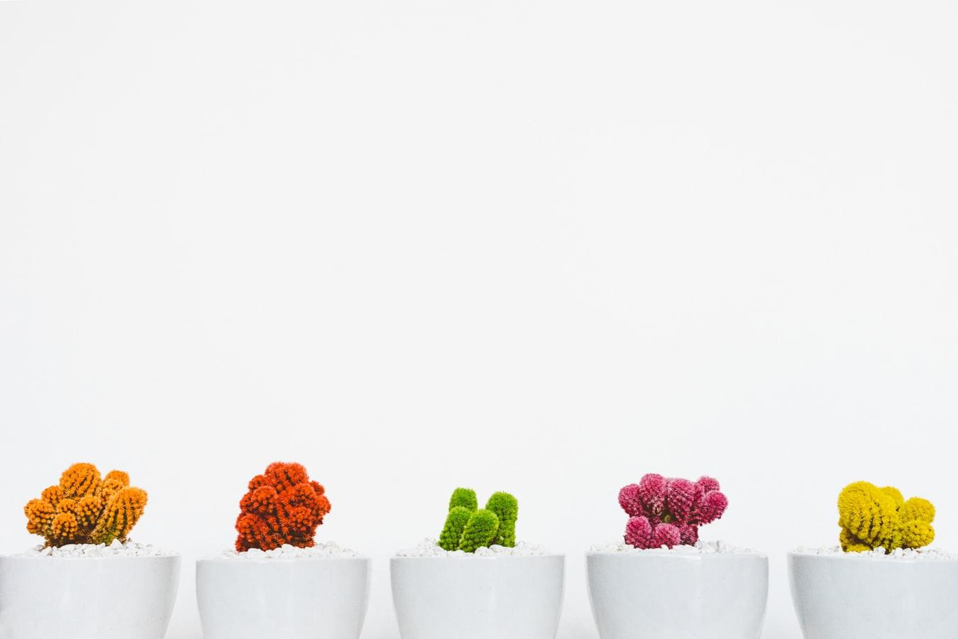 191021 Rainbow Cacti photo-1485841890310-6a055c88698a
